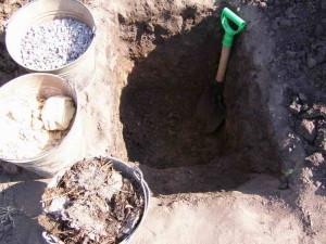 Процесс посадки виноградных саженцев в почву