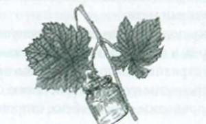 Доопыление виноградных кустов