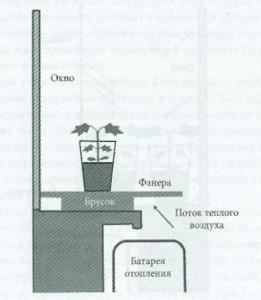 Выращивание черенков дома