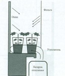 Горшки с растениями на подоконнике