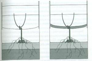 Развитие винограда в различных условиях