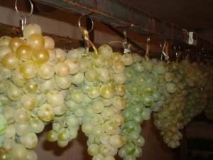 Хранящиеся грозди винограда после уборки урожая