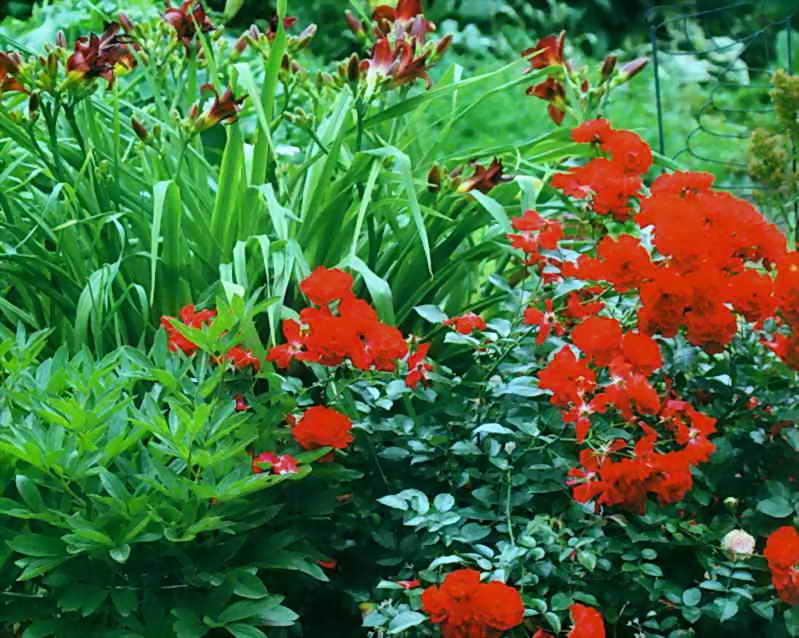 Яркие акценты в саду