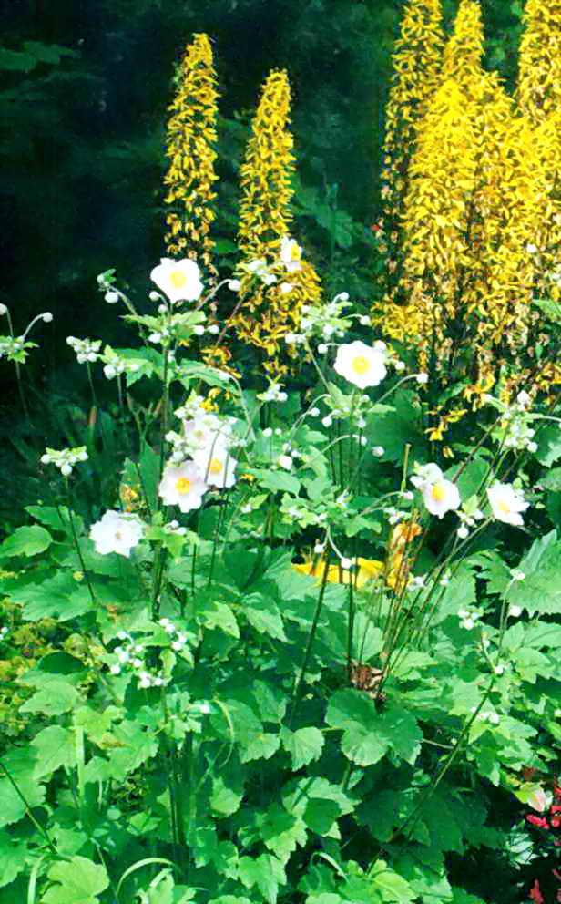 Сочетание цветущий растений