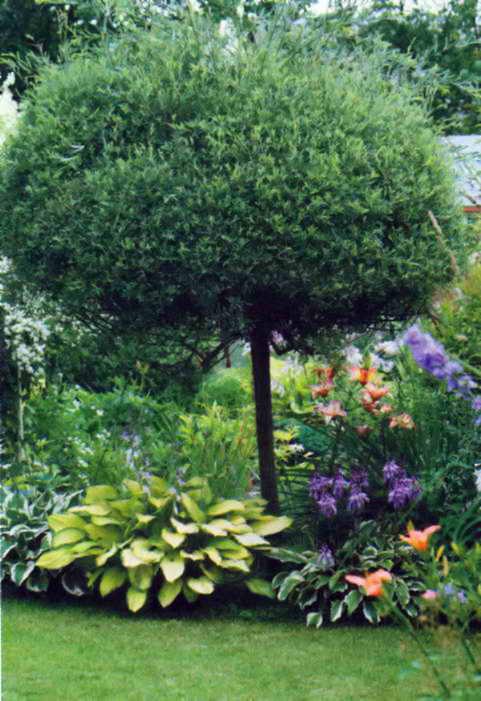 Дерево в центре клумбы