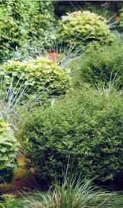 Зеленая горка на даче
