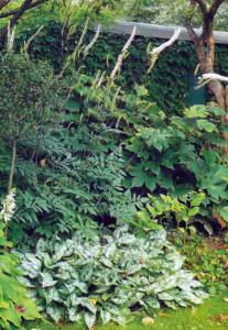 Зеленый уголок в зоне отдыха на даче