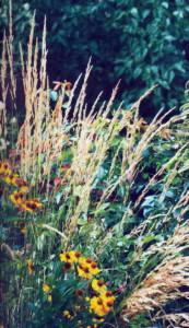 Разнообразие растений на клумбе