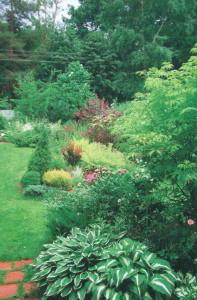 Зеленый уголок на даче