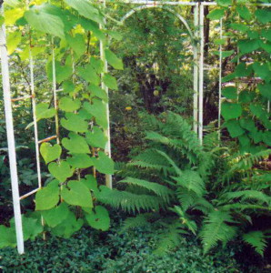 Зонирование при помощи растений