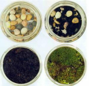 Основы для флорариума