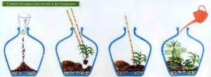 Этапы посадки растений в вазу