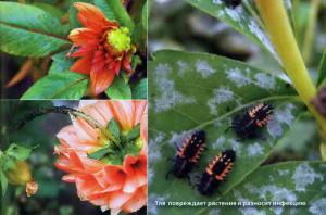Вредители на листьях и цветах