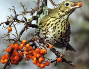 Птица в зимнее время