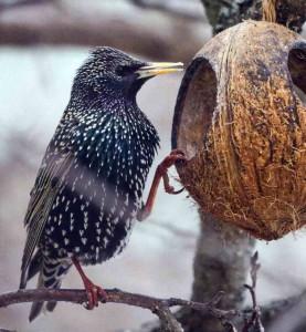 Птицы в поисках еды