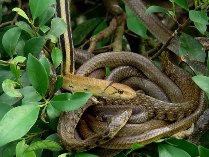 как избавиться от змей на даче