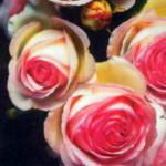 Эден Розе 85 в розарии