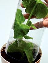 Укрытие растения