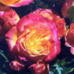 роза Гартеншпасс