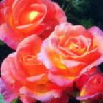роза Инспирацион