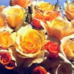роза Санни Скай