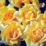 роза Винтер Сан