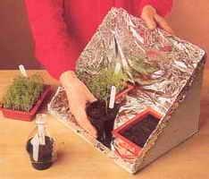 Ёмкость для рассады из картонной коробки