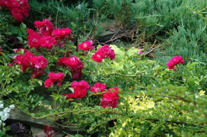 Украшение садовых клумб