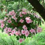 Подвесной горшок с цветами