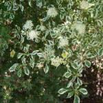 Зеленый сад