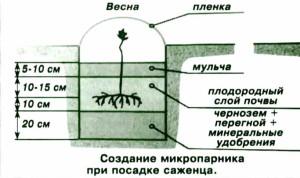 Микропарник для виноградного саженца