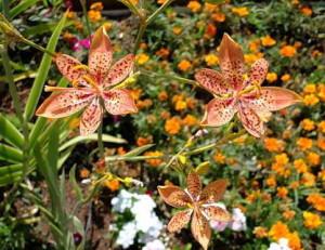 Необычные цветы в саду
