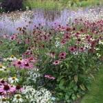 Цветы около дачного водоема