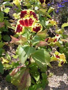 Садовый цветник