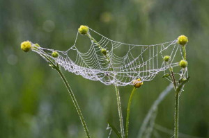 Паутина на растении