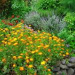 Садовая лужайка