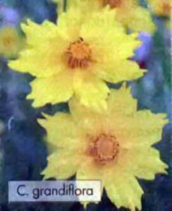 Цветки крупным планом