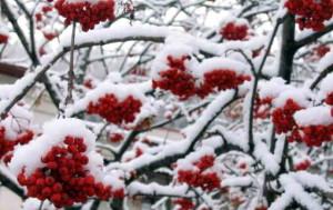 Ягоды в зимний период