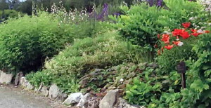 Граница цветника из камней