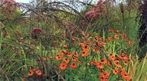 Край из декоративно стабильных растений