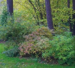 Цветник среди деревьев