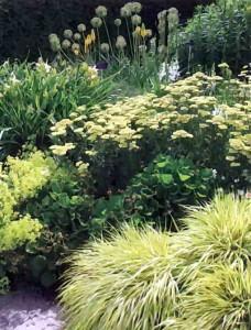 Растения желтого цвета