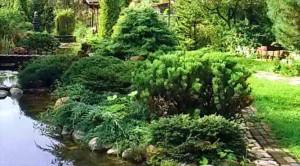Формы растений