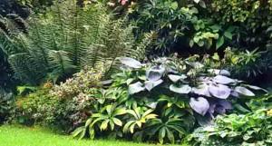 Контраст фактуры и формы листьев