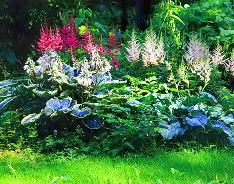 Структура цветника и формы растений - самое важное