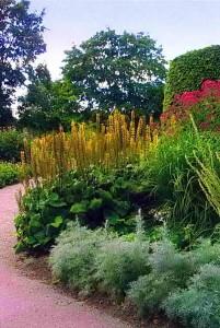 Заполняющие растения