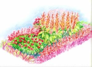 Цветник однолетников в пурпурных тонах