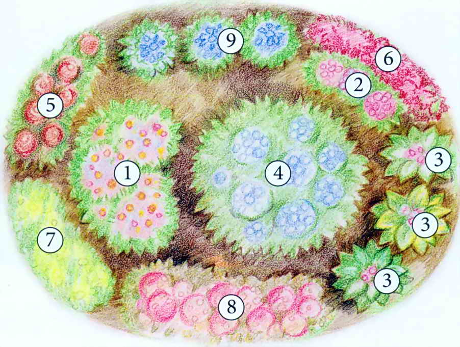 Готовые схемы цветников из многолетников фото схемы.