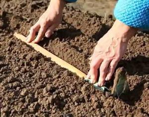 Борозда под семена