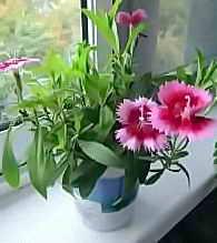 Выращивание цветов дома